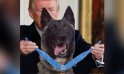 ترامپ خودش را با سگ عملیات قتل بغدادی مقایسه کرد!