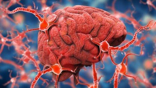 دارویی که از جلبک ساخته شده و آلزایمر را درمان میکند