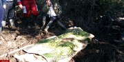 جسد پیرزن مازندرانی مفقودی در سیل پیدا شد