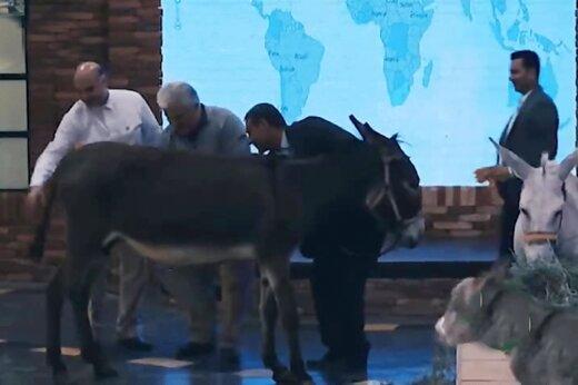 فیلم | دوشیدن شیر الاغ در بزنامه شبکه سه