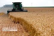 کشاورزان از نرخ خرید تضمینی گندم به بازرسی کل کشور شکایت کردند