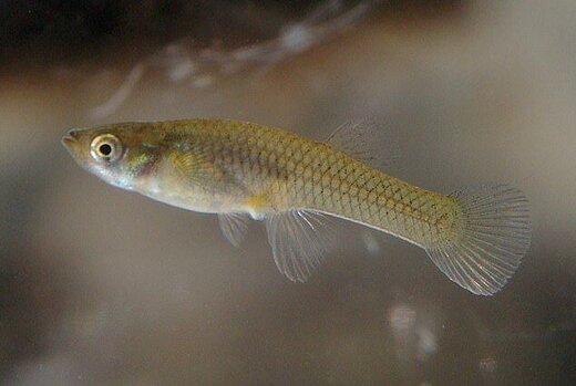 کم اشتهایی ماهیها به خاطر داروی ضدافسردگی