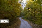 تصاویر | دنیای رنگ و برگ در جنگلهای هیرکانی