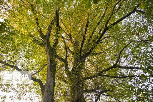 پاییز هیرکانی