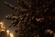 سنگینی برف درختان این شهر را میشکند