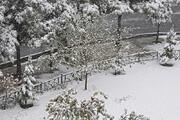 فیلم   بارش برف باعث شادی مردم طالقان شد