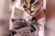 فیلم | ویدئوی استثنایی سان از دست انداختن گربهها با استفاده از نرم افزار تغییر شکل!