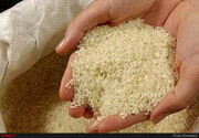 فروش برنج هندی بیش از ۸ هزار تومان و پاکستانی بیش از ۸۹۰۰ تومان تخلف است