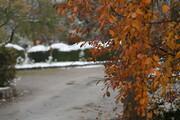 بارش نخستین برف پاییزی در کرمان