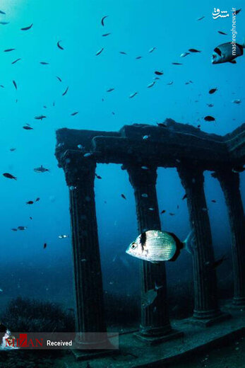 موزهای در زیر آب