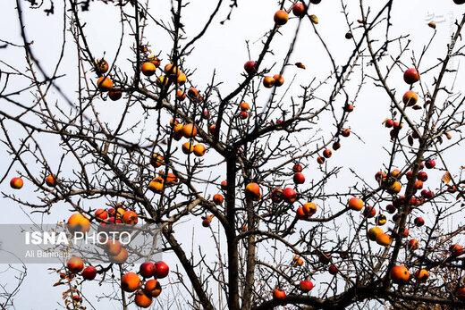 پاییز بینظیر گلمکان