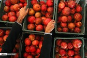 عراق واردات ۱۷ محصول زراعی و باغی را ممنوع کرد