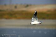 تصاویر   مهاجرت پرندگان به تالاب عشق آباد