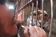 فیلم | رفاقت مرد سوری با شیرها و ببرها در پناهگاه حیوانات