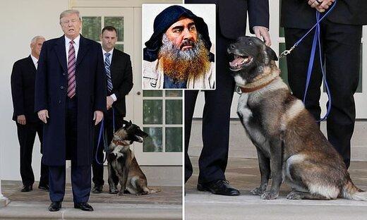 تصاویر | ترامپ ول کن این سگ نیست!