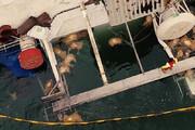 فیلم | ۱۴ هزار رأس گوسفند در دریای سیاه غرق شدند