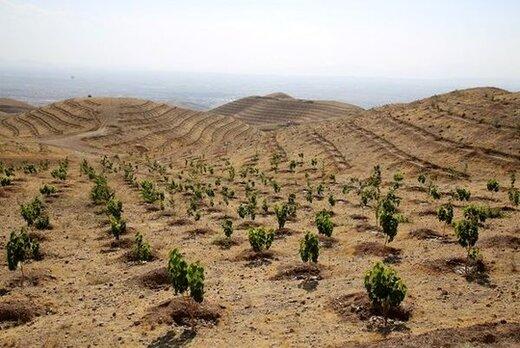 حفاظت محیط زیست استان چهارمحال وبختیاری  به طرح بسیج همگانی 14 میلیون نهال در کشور پیوست