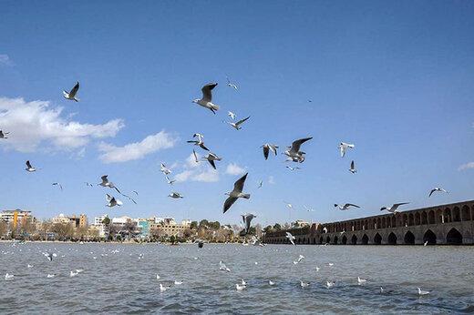فیلم | زاینده رود هم آب دارد و هم پرنده مهاجر