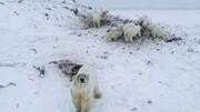 خرسها به روستایی در روسیه حمله کردند