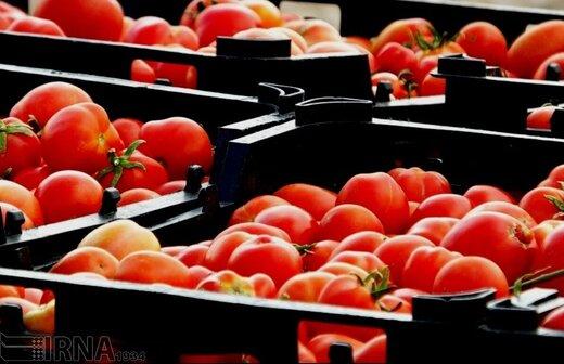 رکوردشکنی قیمت گوجه فرنگی: کیلویی ۲۰ هزار تومان!