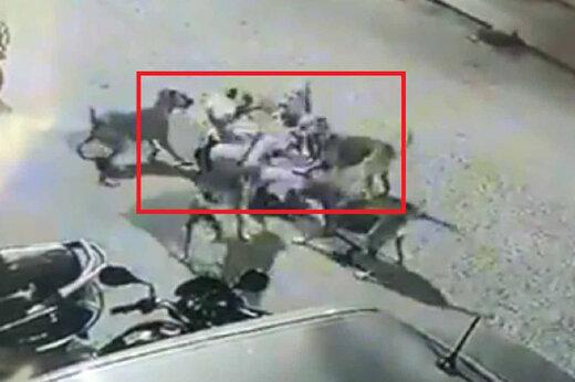 فیلم | حمله ۶ سگ به مرد مسن در خیابانهای هند