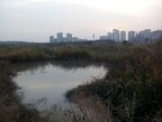 این تالاب راز بوی بد دریاچه غرب تهران است؟