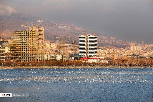 تهران؛ میزبان «پرندگان سیبری»