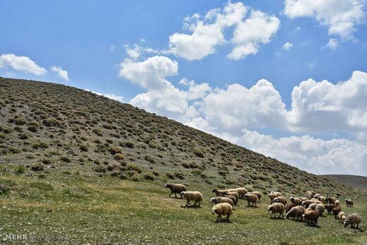 نقش حیاتی مراتع البرز برای پایتخت/ بودجه جنگلکاری کافی نیست