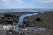 ببینید   ماسهخواری ساحل دریای خزر در روز روشن!
