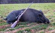 شکارچیها گراز شکار میکنند، پلنگها غذا ندارند