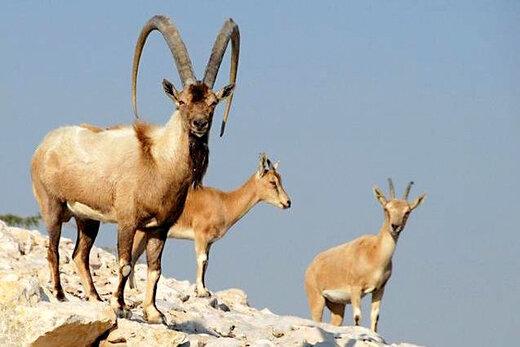 کاهش آمار حیات وحش در منطقه حفاظت شده ارسباران کذب است
