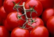 منتظر ارزانی گوجه فرنگی باشید