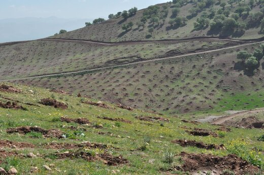 غنی سازی۱۲ هزار هکتار جنگل در لرستان