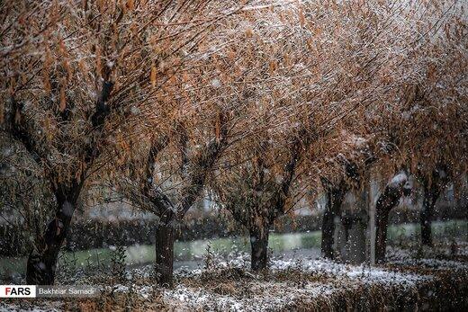 بارش برف در «سقز»