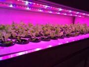 لامپ رشد گیاه ارزان