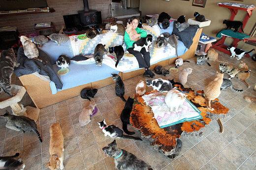 فیلم | زندگی یک زن با ۲۰۰ گربه