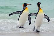 فیلم | سر کار گذاشتن پنگوئنها با نور