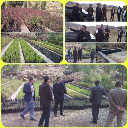 نهال کاری در عرصه های طبیعی شهرستان پلدختر