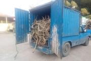 ۴۶۰ کیلوگرم چوب تاغ قاچاق در دامغان کشف شد
