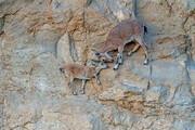 عکس   عاشقانههای مادر فرزندی در صحرای نگوو