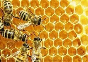 عسلی که زیر ۷۰ هزار تومان قیمت دارد طبیعی نیست!