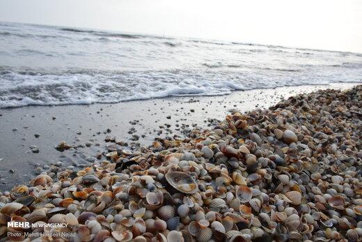 صدف های دریایی جاذبه دیدنی سواحل آستارا