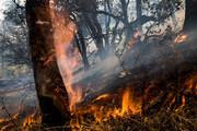 فیلم | جنگلهای سیاهکل همچنان درآتش میسوزد