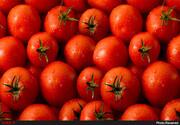 تورم برخی صیفیجات در آذرماه، سه رقمی شد/ گوجه ۱۷۰ درصد رشد قیمت