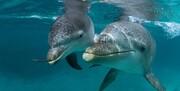 دامپزشکی تهران: از مرگ دلفین میلیاردی بیخبریم