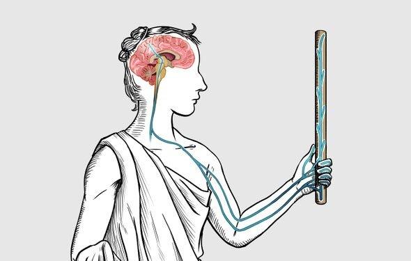 مغز انسان میتواند محل لمس شدن را حتی فراتر از بدن هم پیدا کند.