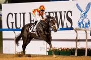درخشش اسب ایرانی در مسابقات کارناوال دوبی