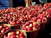 تاکید معاون استاندار آذربایجانغربی بر یافتن بازارهای جدید برای صادرات سیب استان