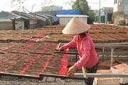 فیلم | مراحل تولید انبوه «عود» در دهکدهای در ویتنام