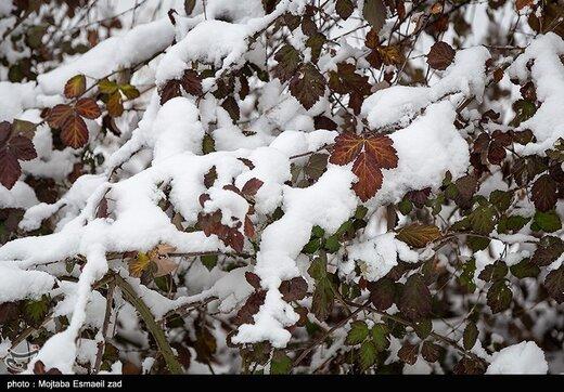 بارش برف در خراسان رضوی ظرف یک دهه اخیر بیسابقه است